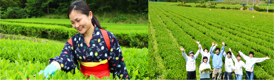 お茶摘みをする笑顔の女性の写真。茶畑の真ん中で7人の男女が楽しそうにしている写真。