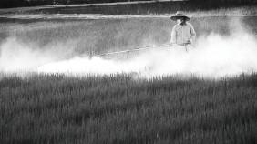 農薬と化学肥料が大量に使用されている様子