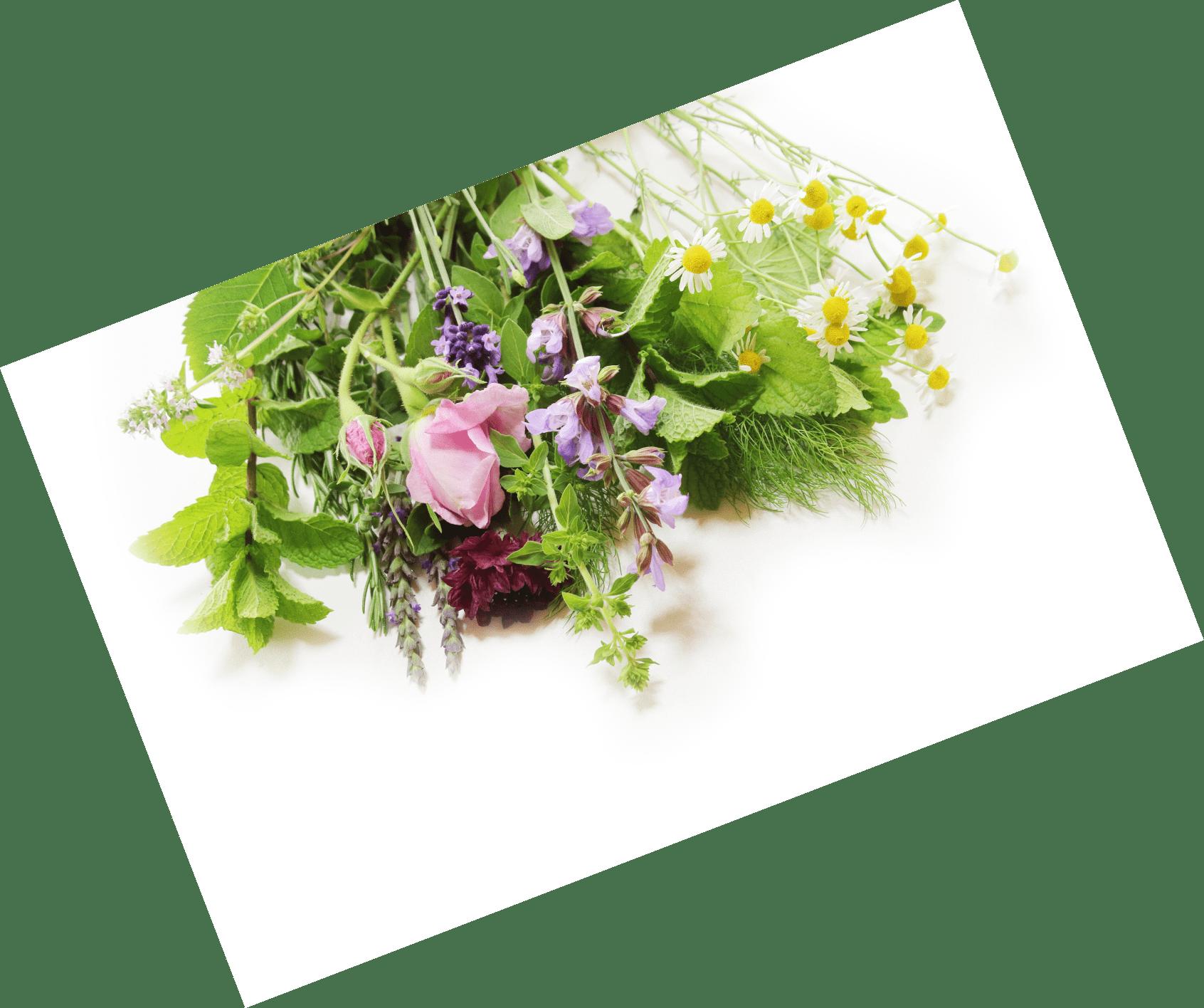 色々な花の写真