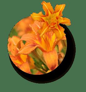 グリチルリチン酸ジカリウム(甘草)の画像