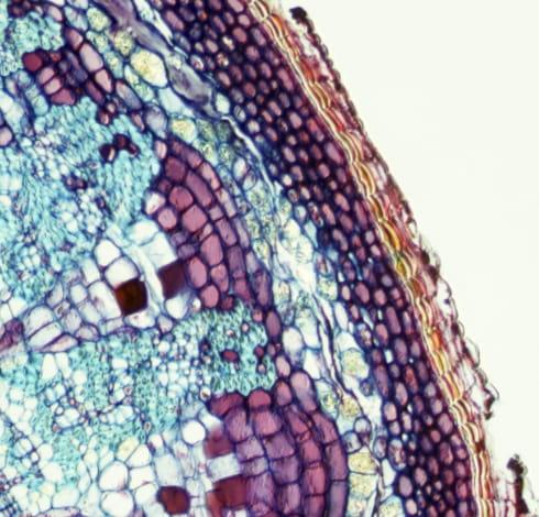 細胞を拡大した写真