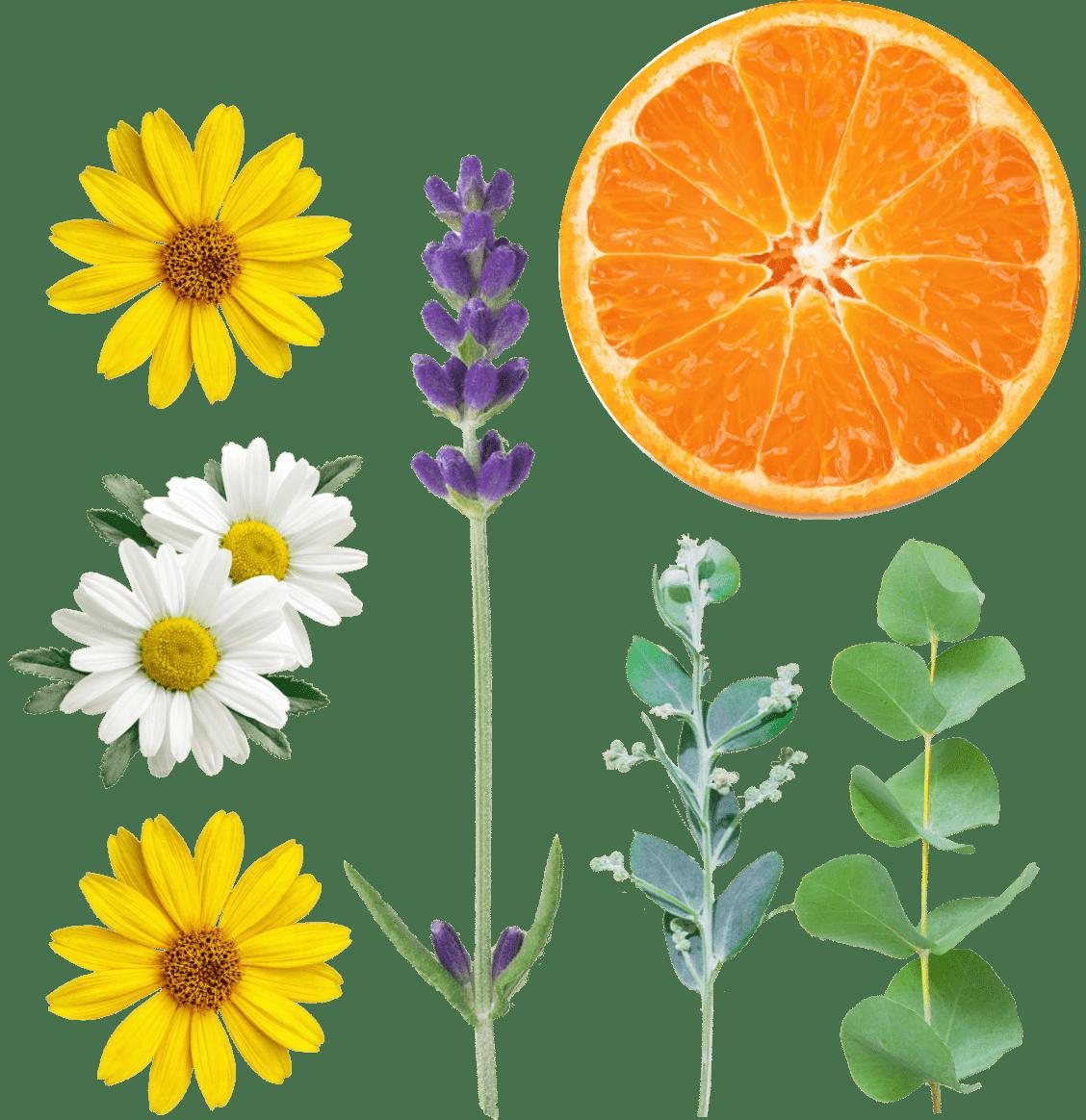 植物や果実の写真
