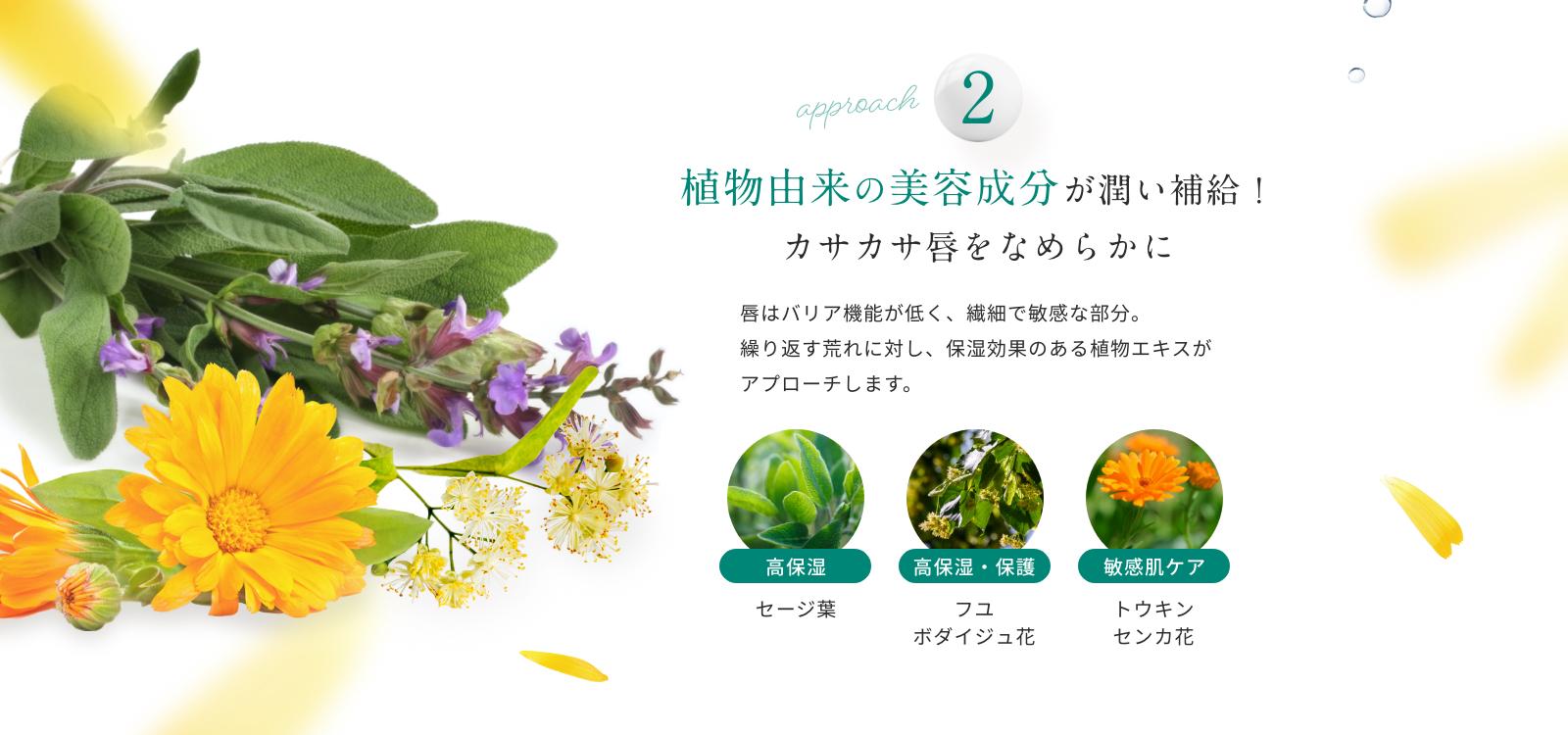 植物由来の美容成分が潤い補給